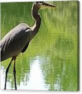 Next To Water Canvas Print