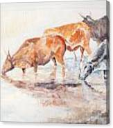 Nguni Cattle Canvas Print