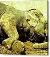 Niabi_asian Elephant Canvas Print