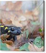 Nice Fire Salamander Canvas Print