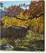Nice Setting For A Rock Canvas Print