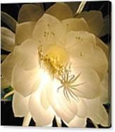 Night Bloomer Canvas Print