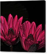 Night Blooming Lily 1 Of 2 Canvas Print