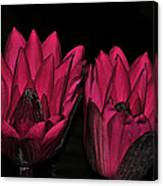 Night Blooming Lily 2 Of 2 Canvas Print