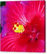 Night Fire Hibiscus Canvas Print