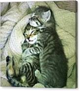 Night Night Kitties Canvas Print