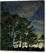 Night Pines Canvas Print