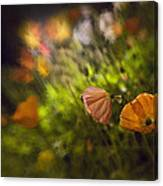 Night Poppies Canvas Print