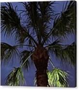 Night Sky Through The Palm Canvas Print