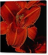 Night Time Lilly Canvas Print