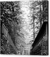 Nikko Pathway And Fog Canvas Print
