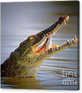 Nile Crocodile Swollowing Fish Canvas Print