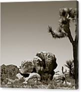 Joshua Tree National Park Landscape No 4 In Sepia  Canvas Print