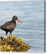 No Bird Is An Island Canvas Print
