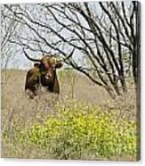 No Bull Canvas Print