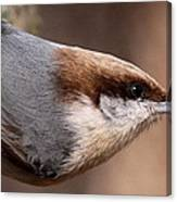 No Hands - Fayetteville - Nuthatch Canvas Print