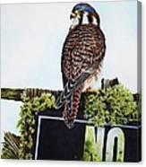 No Hunting Canvas Print