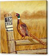 No Hunting   Pheasant Canvas Print