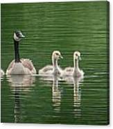 Geese Family Canvas Print