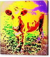 No Mercy For The Cow, They Say, But Why Not  Canvas Print