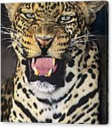 No Solicitors African Leopard Endangered Species Wildlife Rescue Canvas Print
