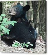 Bear - Cubs - Mother Nursing Canvas Print