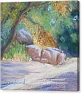 No Water At Cienega Creek Canvas Print