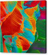 Noam Canvas Print