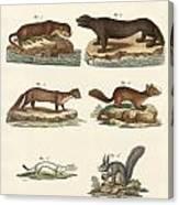 Noble Furs Canvas Print
