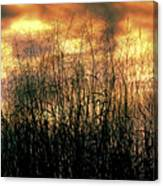 Noble Grasses Canvas Print