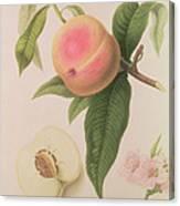 Noblesse Peach Canvas Print