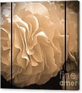 Non-stop Begonia Triptych Canvas Print