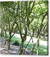 Norfolk Botanical Garden 7 Canvas Print