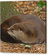 North American River Otter Canvas Print