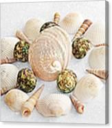 North Carolina Circle Of Sea Shells Canvas Print