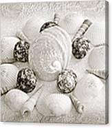 North Carolina Circle Of Sea Shells Bw Canvas Print