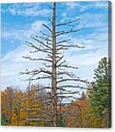 North Country Byway Canvas Print