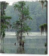 North Florida Cypress Swamp Canvas Print
