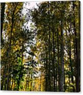 North Lions Park - Mount Vernon Washington Canvas Print