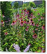 North Point Park Flowers Canvas Print