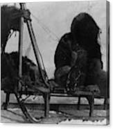 North Pole Sewing, C1909 Canvas Print