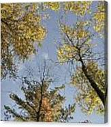 North Woods In The Fall Canvas Print