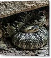 Northern Black-tailed Rattlesnake 2 Canvas Print