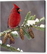 Cardinal and Pine Cones Canvas Print