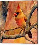 Northern Cardinal II Canvas Print