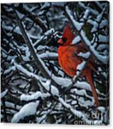 Northern Cardinal In Winter Canvas Print