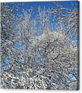 Northern Colors Canvas Print