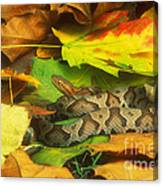 Northern Copperhead Camouflaged Canvas Print
