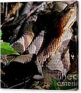 Northern Copperhead Canvas Print