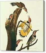 Northern Flicker Birds Canvas Print